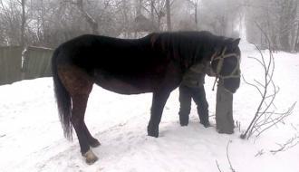 Рецидивист из Шепетовского района, через три дня после увольнения, украл коня и ограбил пенсионерку