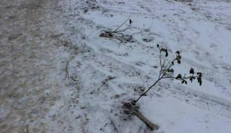 В Славуте неизвестный на автомобиле повредил Аллею памяти Героев Небесной Сотни