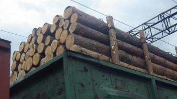 Древесину из Хмельницкой области незаконно экспортировали в ЕС