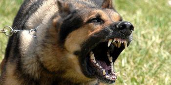 Хмельницкие копы подстрелили собаку, которая кромсала мужчину