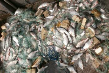 В Хмельницкой области привлекли к ответственности 295 рыбаков-браконьеров