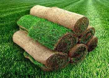 Газонная трава в рулонах: преимущества и недостатки