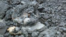 Незаконную дорогу из отходов нашли в Подмосковье