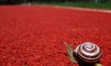Бесшовное покрытие из резиновой крошки: особенности и преимущества